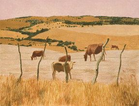Marie Ban Krávy z Tarify