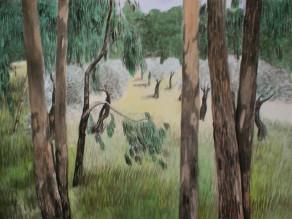 Marie Ban Eukalypty akvarel