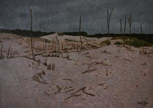 Holandské duny v Schoorlu